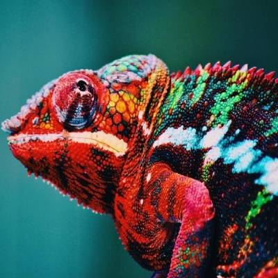 Photo of a chameleon in bold colours to illustrate change in your environment