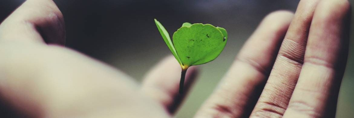 Image of a hand with a seedling growing from the palm to illustrate supporting growth